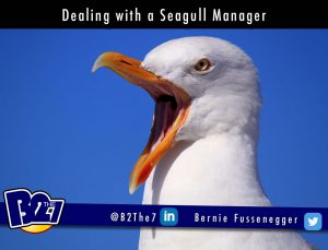Dealing with a Seagull Manager